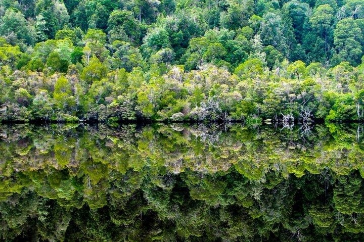 Dr. Martin Oretsky took this gorgeous shot of the Gordon River in Tasmania. It clinched 1st place in our 1st contest.