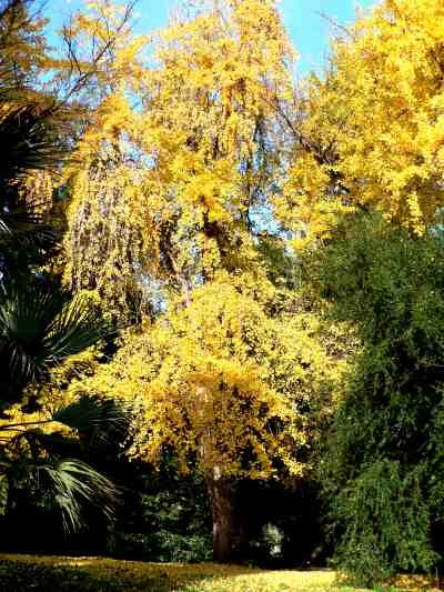 BEAUTIFUL ITALIAN BOTANICAL GARDENS - Orto Botanico in Rome