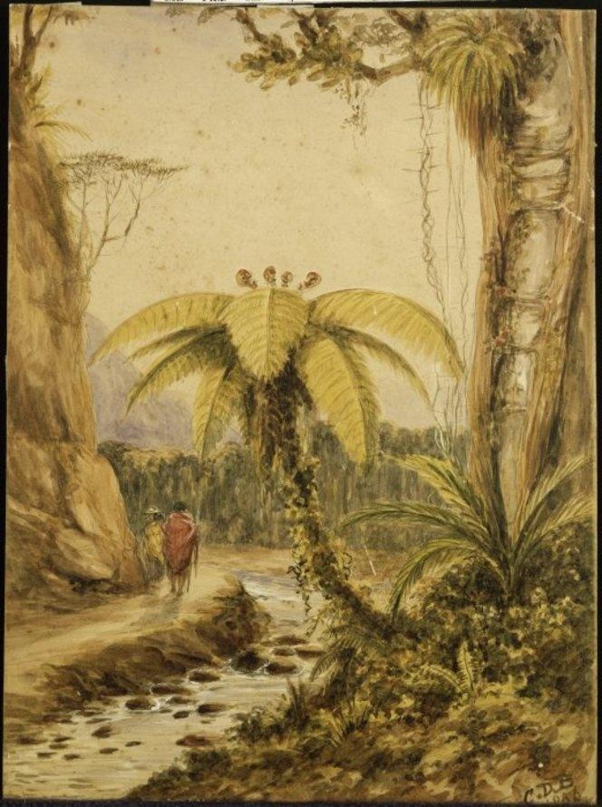 Barraud, Charles Decimus, 1822-1897 :Sketch of tree fern, rata  Valley of the Wainui-o-mata, Port Nicholson, New Zealand. 1856.