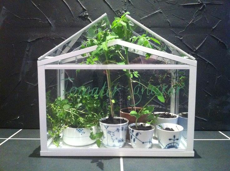 Ikea Mini Greenhouse Royal Copenhagen Cups Garden