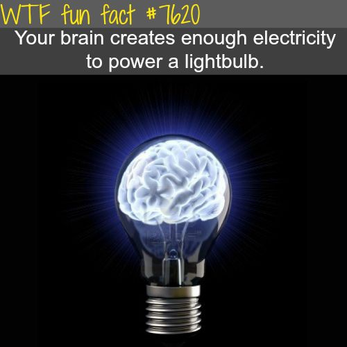 How Much Electricity In Brain