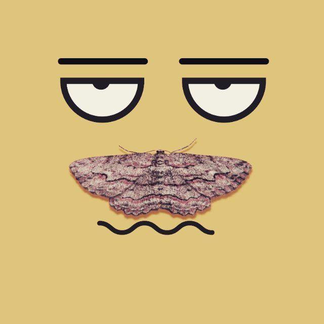 ... #butterfly #moth #pet #animal #nature #wild #adventure #face #profile #selfie #vector #flatdesign #creative #graphicdesigner #graphicdesign #icondesign #concept #streetart #mustache #illustration #draw #paint #cartoon #color