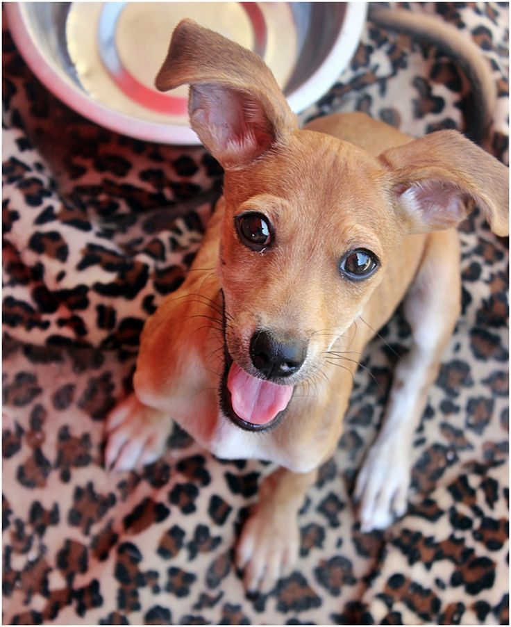 Adorable puppy in animal shelter in Holon