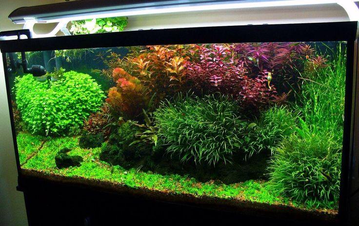Acuario plantado acuarios pinterest acuario dise o for Disenos de acuarios
