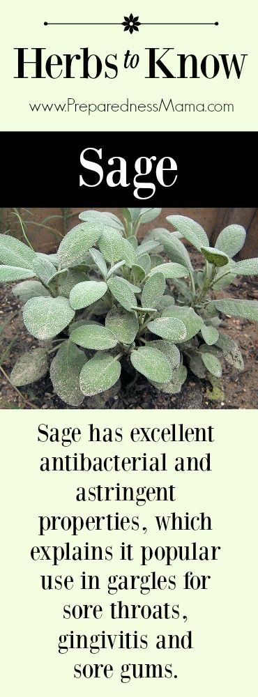 Herbs to Know: Sage. It has antibacterial and astringent properties, which explains it popular use in gargles for sore throats, gingivitis and sore gums | PreparednessMama