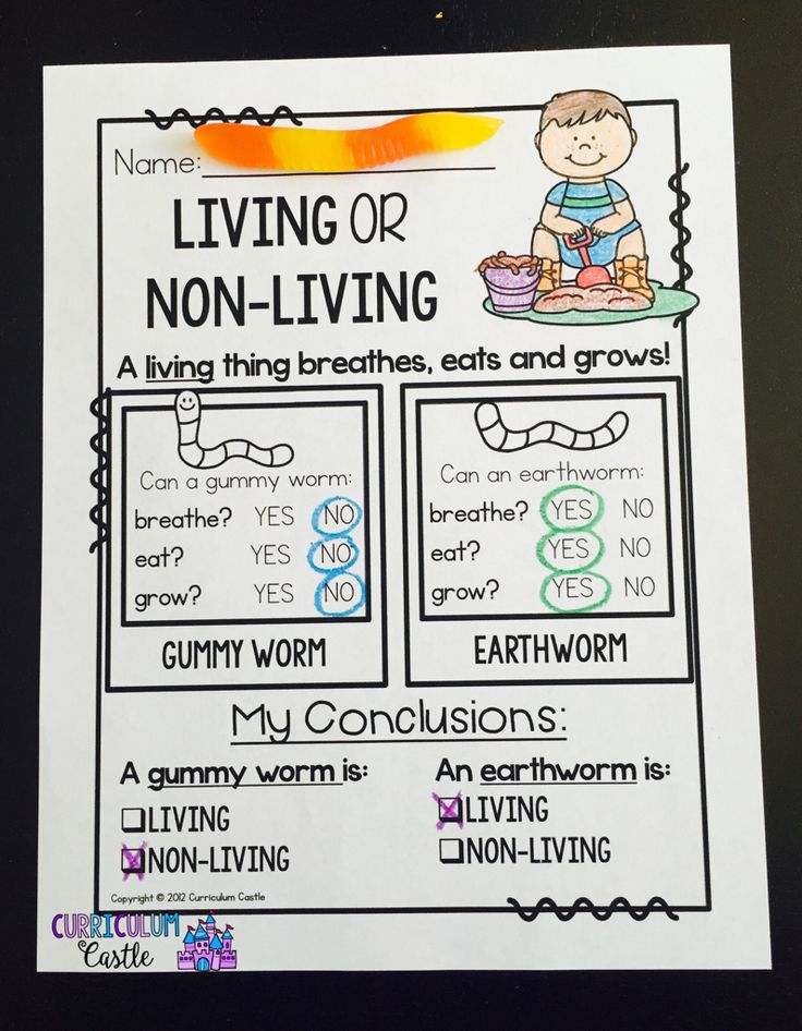 Living or non-living: comparing earthworms and gummy worms!