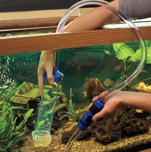 How to clean a Fish Tank (Aquarium Maintenance Tips)