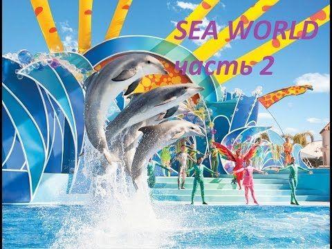 Sea World ORLANDO Часть 2. Морские львы, Акулы! Фламинго на прогулке.
