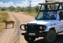"""Nasjonalparken byr også på den største konsentrasjonen av dyr, så besøkende har rik mulighet for å oppleve f. eks """"Big 5"""", den populære betegnelse for elefant, nesehorn, leopard, bøffel og løve. http://nyati-safari.no/destinations/south-africa/nyati-safari-lodge-by-kruger-park/"""