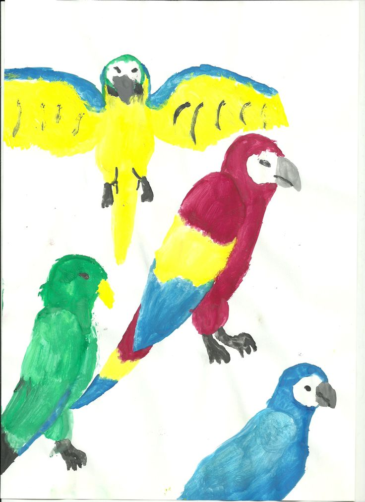 Parrots of more colors, without background . Nora (7)