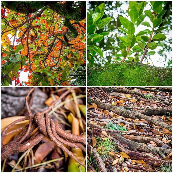 La naturaleza y su hermosa diversidad es una de las mejores fuentes de inspiración para nuestros hogares.   ¿Qué tal un techo de hojas, una pared verde musgo o un piso que se confunde entre raíces y hojas caídas?   Inspirate con #GenteOnline en: http://ow.ly/sxRRl
