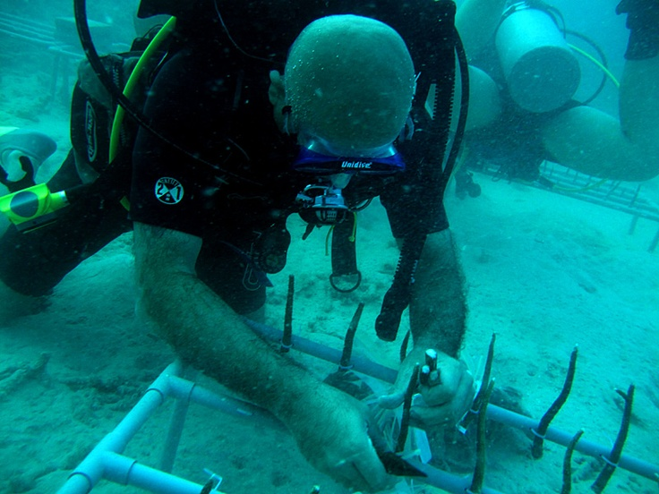 Helping to tie nubbins in the coral nursery at Perhentian Island with Reef Check Malaysia.