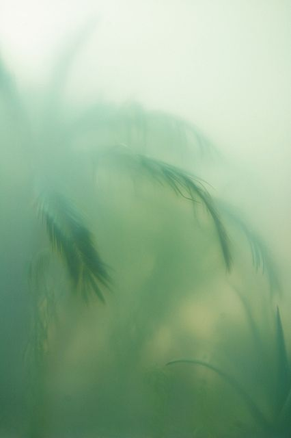 Green sway