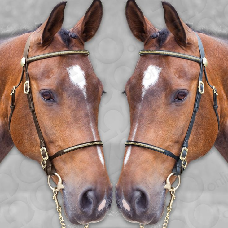 The bridle features a solid brass clincher, nose and brow band, finished with a brass rosette. Fully adjustable, the bridle has several brass buckles for a flexible fit. #showbridle #finestimportedleather #solidbrass #zoo-online