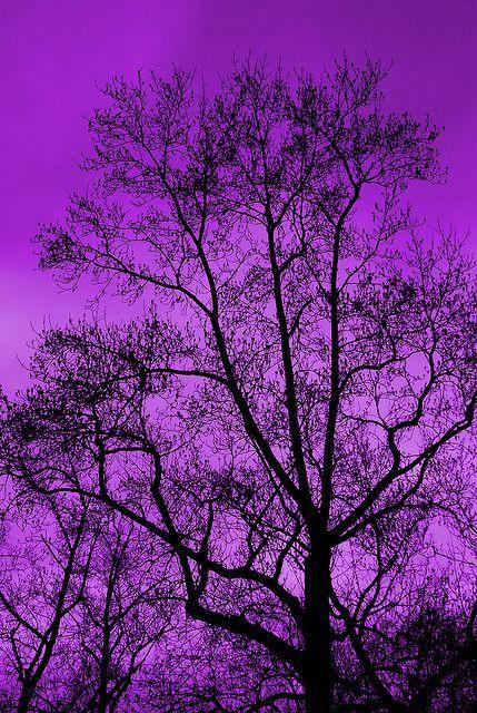 purple sky trees | Found on justkeepswimmingirl.tumblr.com