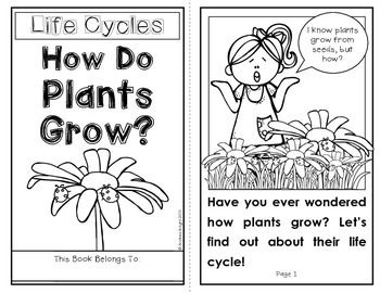 How Do Plants Grow? This download includes an 11-page student book with clear illustrations and nonfiction text features, plus picture cards and a written comprehension activity. #plants #lifecycles $