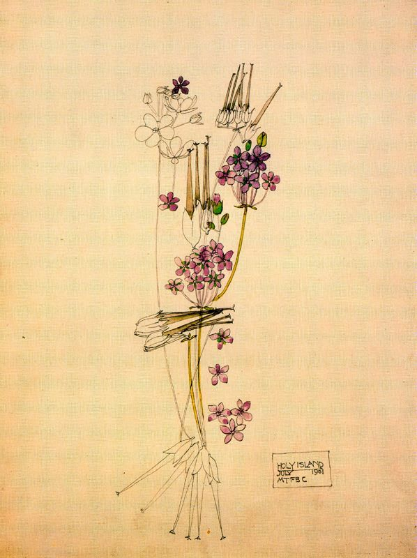 Charles Rennie Mackintosh. #art #illustration #drawing #CharlesRennieMackintosh #flora #floral #flowers #botany