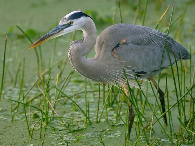 Pulicat Lake Bird Sanctuary - in Tamil Nadu, India