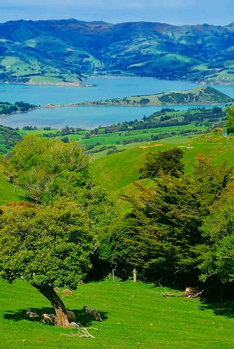 Looking Towards Akaroa Harbour, Banks Peninsula, South Island, New Zealand. Just over the hill from Christchurch.