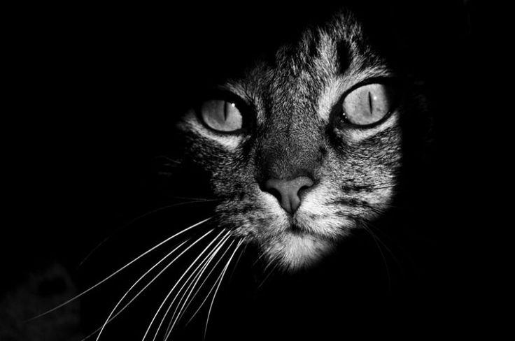 mačací život v čierno-bielych fotografiách