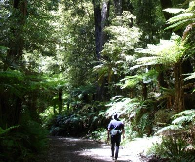 Tramping through the forest with Te Urewera Treks