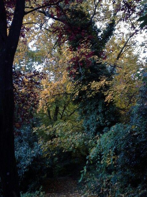 Az Ősz összes színe.