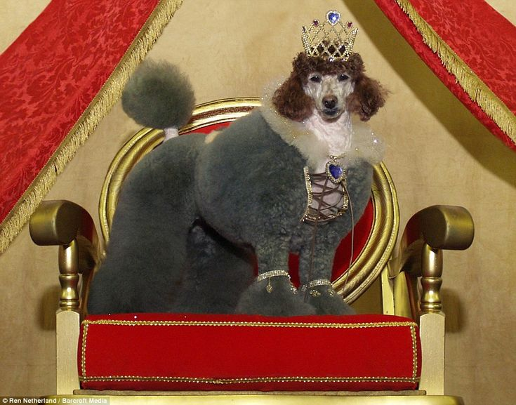 Hmm. Not sure Queen Elizabeth appreciates the homage by this poodle.