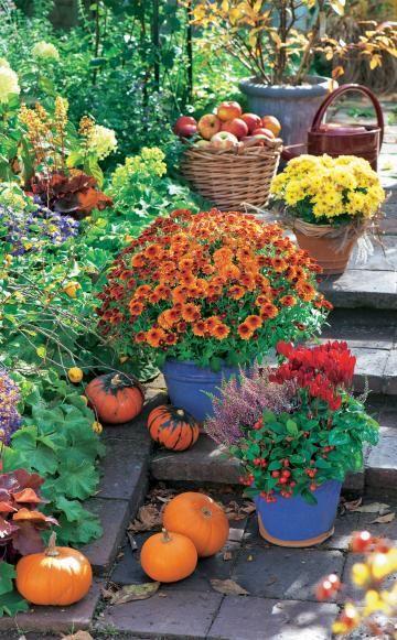 Kürbisse aus dem Garten, Herbst-Chrysanthemen, rote Alpenveilchen, Scheinbeere (Gaultheria) und Heide säumen den Treppenaufgang neben demTerrassenbeet. Drohen erste Minusgrade, stellt man die Spätblüher über Nacht ins Haus oder bedeckt die Pflanzen mit dünnem Wintervlies