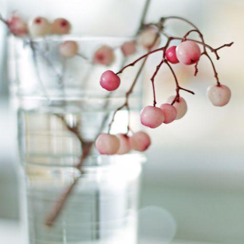 Pale pink berries