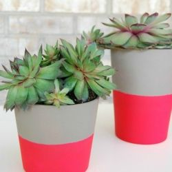 DIY Hot Pink Color Block Planters