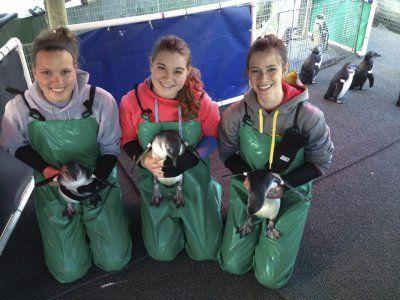 AVIVA volunteers having fun in the penguin pen at #SANCCOB