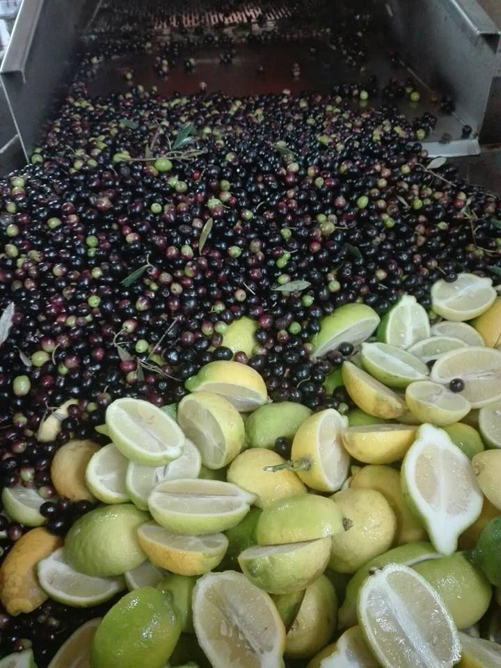 Produzione Olio aromatizzato al Limone, Olio Poldo