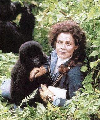 gorillas in the mist film - Cerca con Google