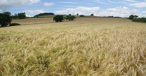 Skąd się bierze polska, zdrowa żywność? Rozmowa z rolnikami ekologicznymi | ekologiczne rodzicielstwo