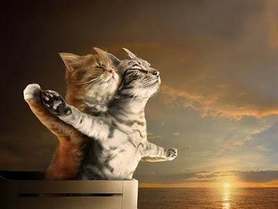 Catitanic :D: Animals, Pets, Funny Stuff, Funnies, Titanic Cats, Humor, Things, Kitty