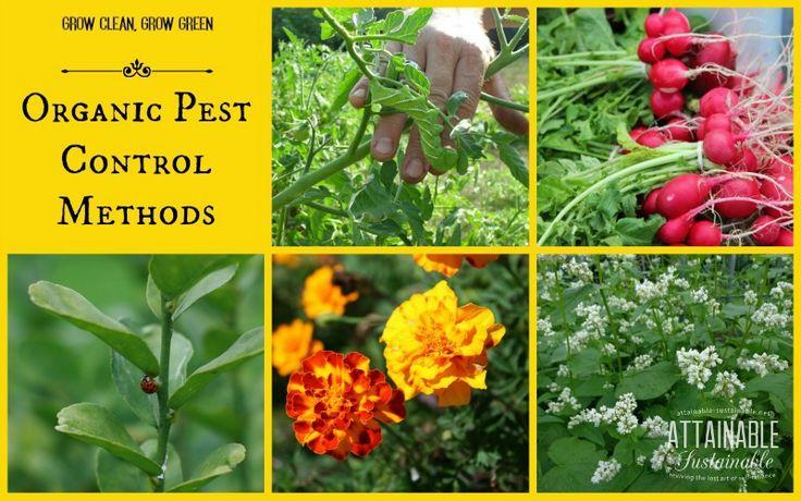 """Органическое садоводство не просто означает """"сидеть сложа руки и пусть ошибки есть у него.""""  Это означает, что, используя различные естественные методы управления, чтобы держать их под контролем."""