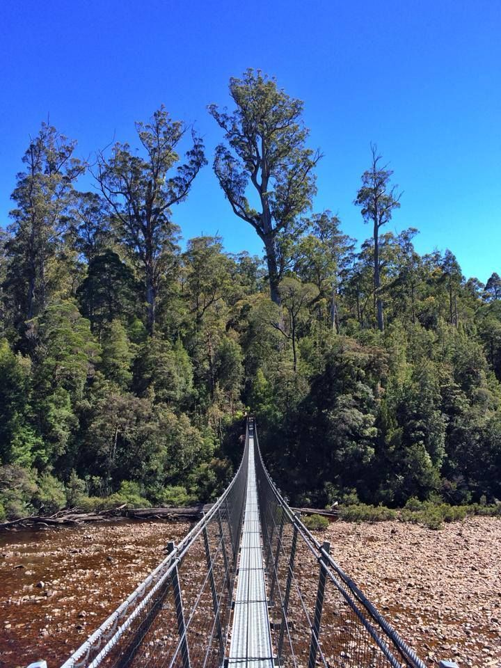 Tahune Airwalk & Hastings Caves | Tours Tasmania