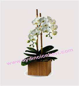 beyaz orkide şık tasarımı ile aydın çiçek evinde beyaz orkide siparişi verebilirsiniz