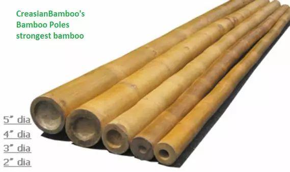 Bamboo cane&poles-Wholesalebestprice,Bamboo supplies USA,buy bamboo for sale - bamboo pole,plants-Wholesale bamboo on Vimeo