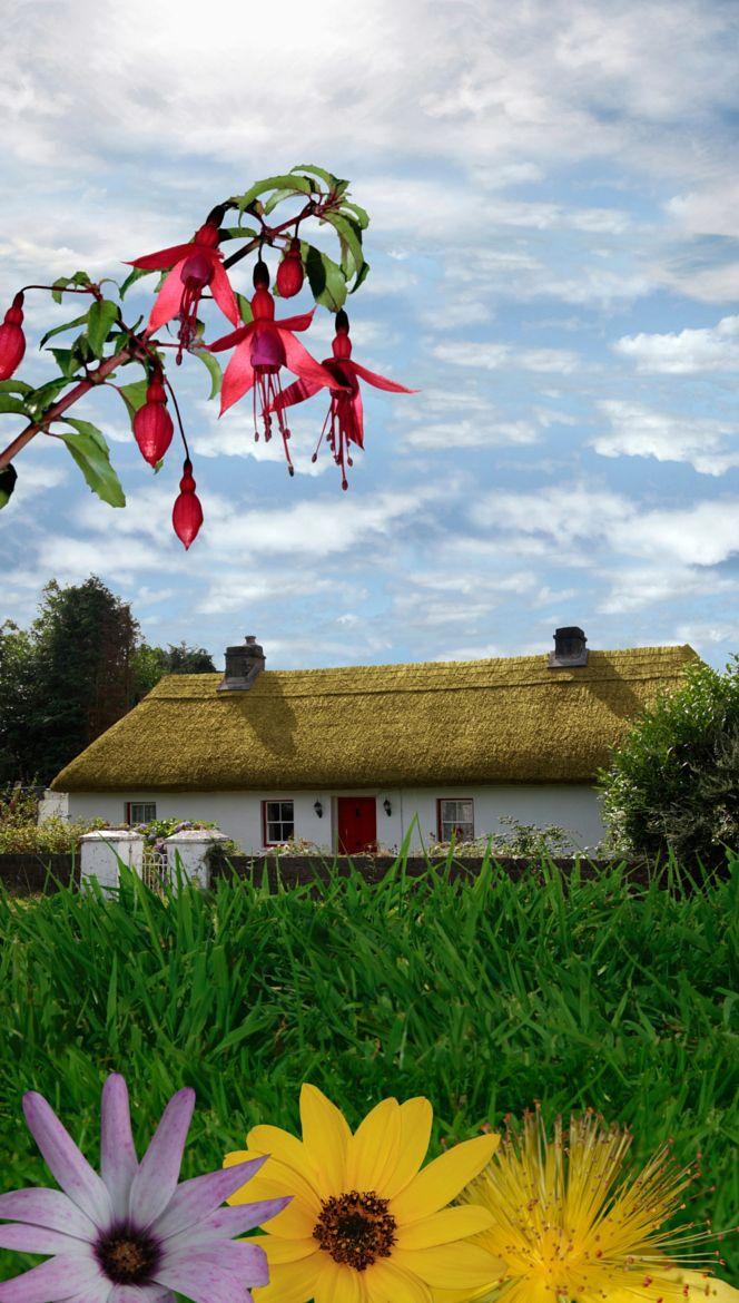 Country living in Ireland by David Morrison on 500px