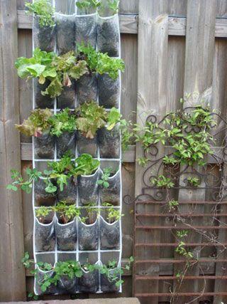 Urban Gardening - shoe organizer at planter...I think I have one of these somewhere....