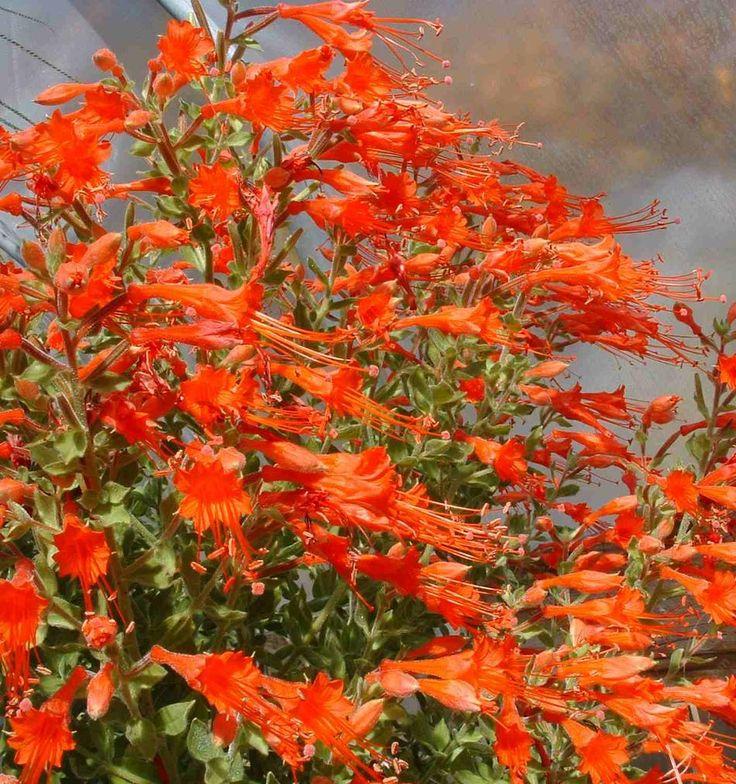 California Native Plant Landscape Design Examples: Best 25+ California Native Landscape Ideas On Pinterest