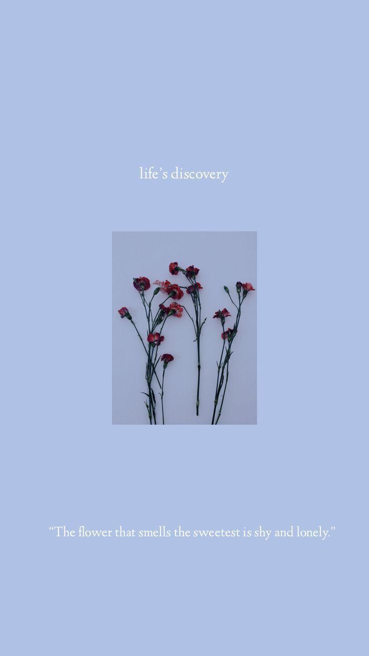 IPhone Hintergrundbild – Leben – Pinme Hintergrundbild