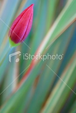 New Life Royalty Free Stock Photo