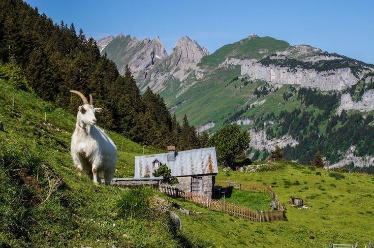 Of de Alp, Photo by Hans Zürcher, Teufen, Switzerland
