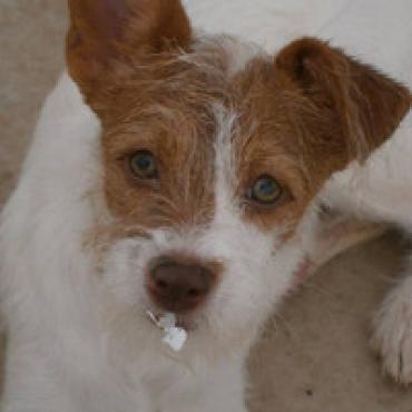 Hund, Milka (Mischling, Hündin, 7 Monate) Spanien - Milka - süße Versuchung