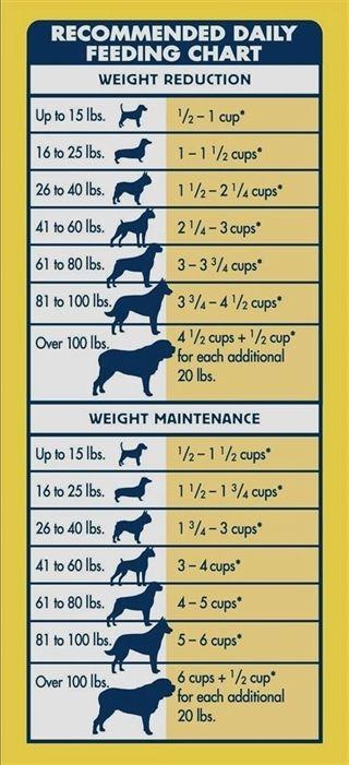 Dog Training Arm Bow Wow Dog Training Zanesville Ohio Dog