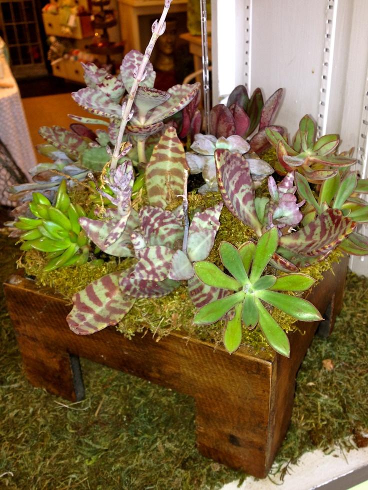 Succulent dish garden our terrariums plants for Succulent dish garden designs