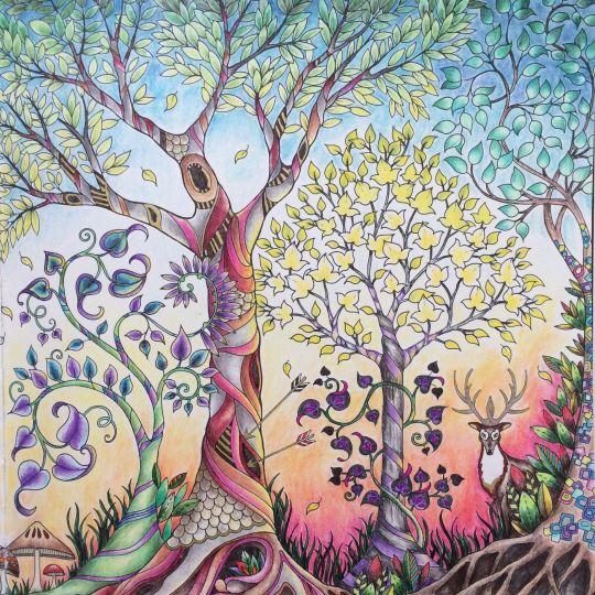 Trees Owl Enchanted Forest Arvores Coruja Floresta Encantada Johanna Basford Coloring BookEnchanted