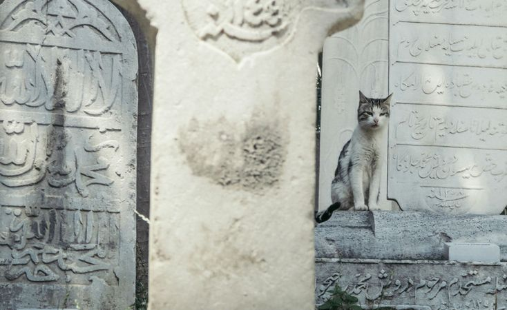 17. An Istanbul cat: Istanbul is a cat lover's dream. Everywhere you turn, you're likely to find a friendly feline rubbing up against you.